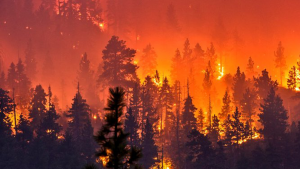 Image of a mountainside with pine trees fully engulfed in bright flames.